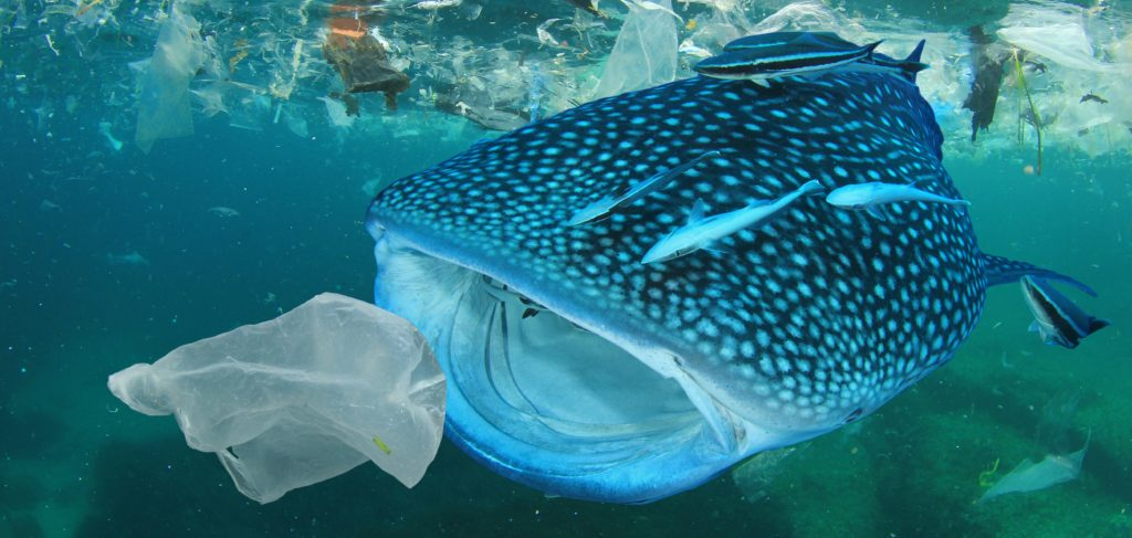 Life in plastic is not fantastic – stop pollution